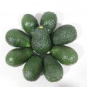 AGUACATES HASS 5 KG.