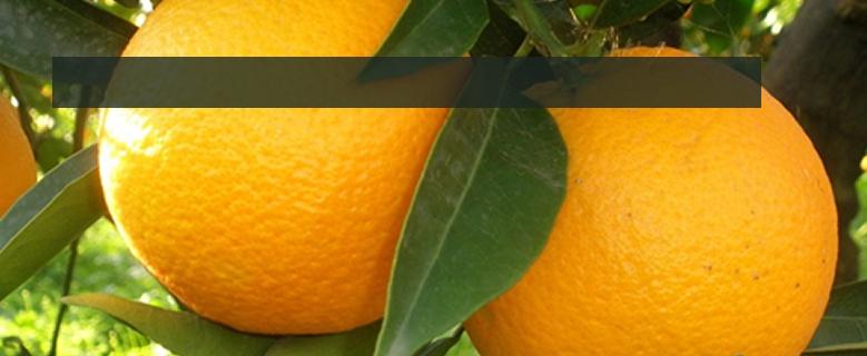 Venta de Naranjas, mandarinas y miel