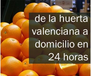 Naranjas de la huerta a la mesa en 24 horas.
